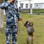 PLAAF's way of preventing bird hits using bird hunting falcons and next destroying monkeys 1
